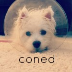 coned puppy